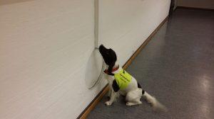 AntiPest hundesøk etter veggedyr.