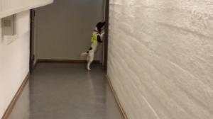 Hundesøk etter veggedyr